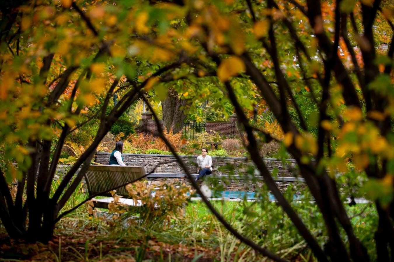 Sunken Garden in Radcliffe Yard.