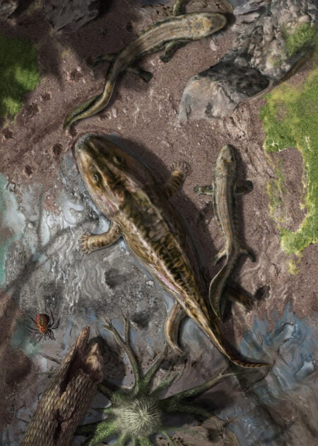 Reconstructing vertebrates rise from the water to land - Harvard Gazette