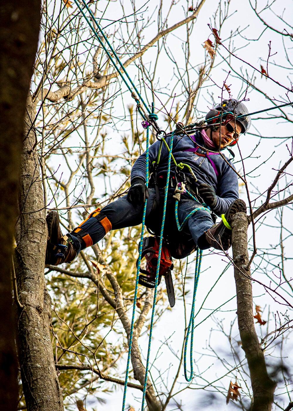 AJ Tataronis works in a tree.
