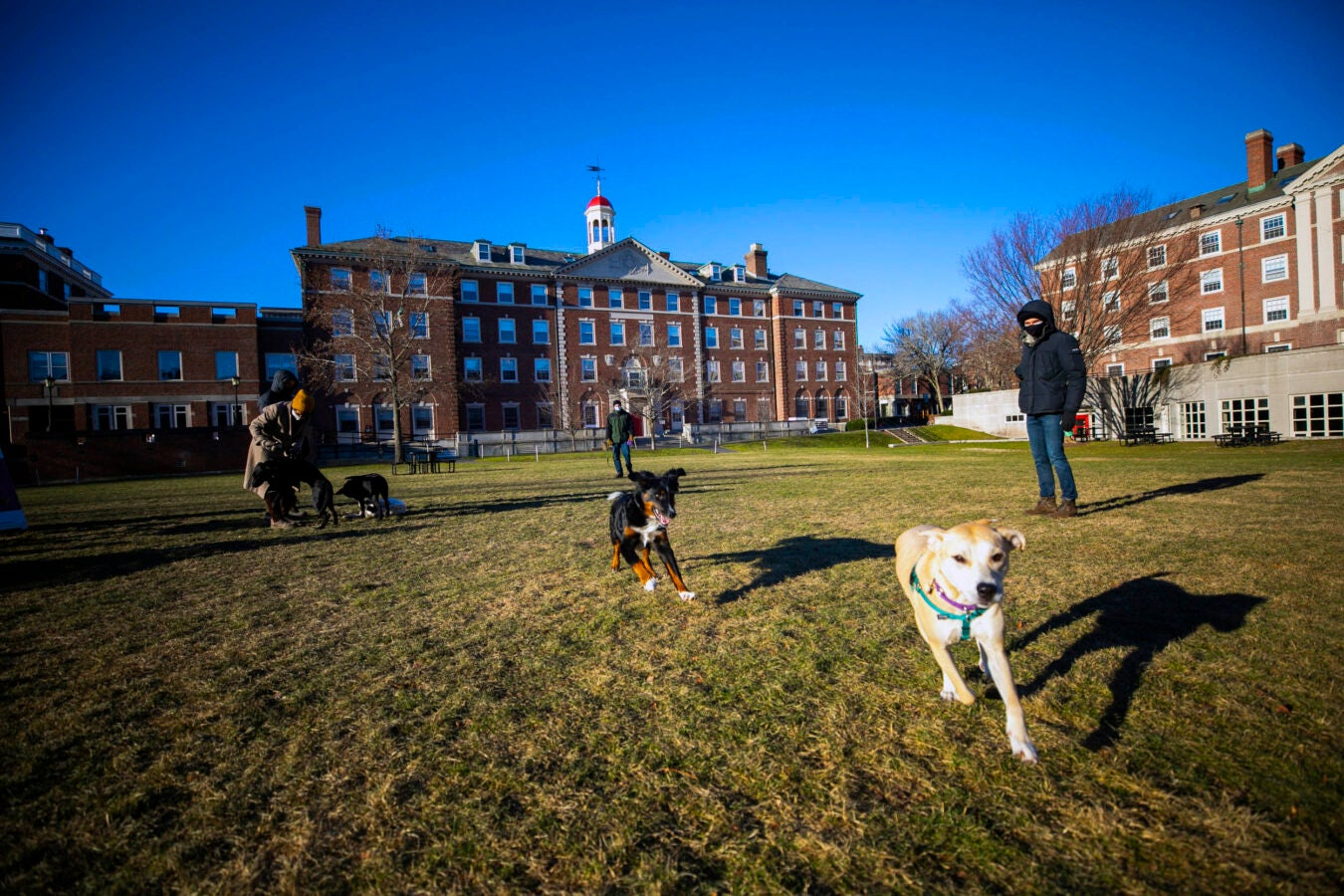 A puppy play group gathers in open space facing Cabot House.