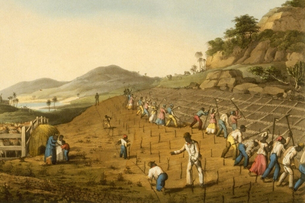 """""""Digging Holes for Planting Sugar Cane, Antigua, West Indies, 182"""
