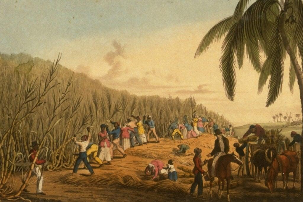 """""""Sugar Cane Harvest, Antigua, West Indies, 1823"""""""