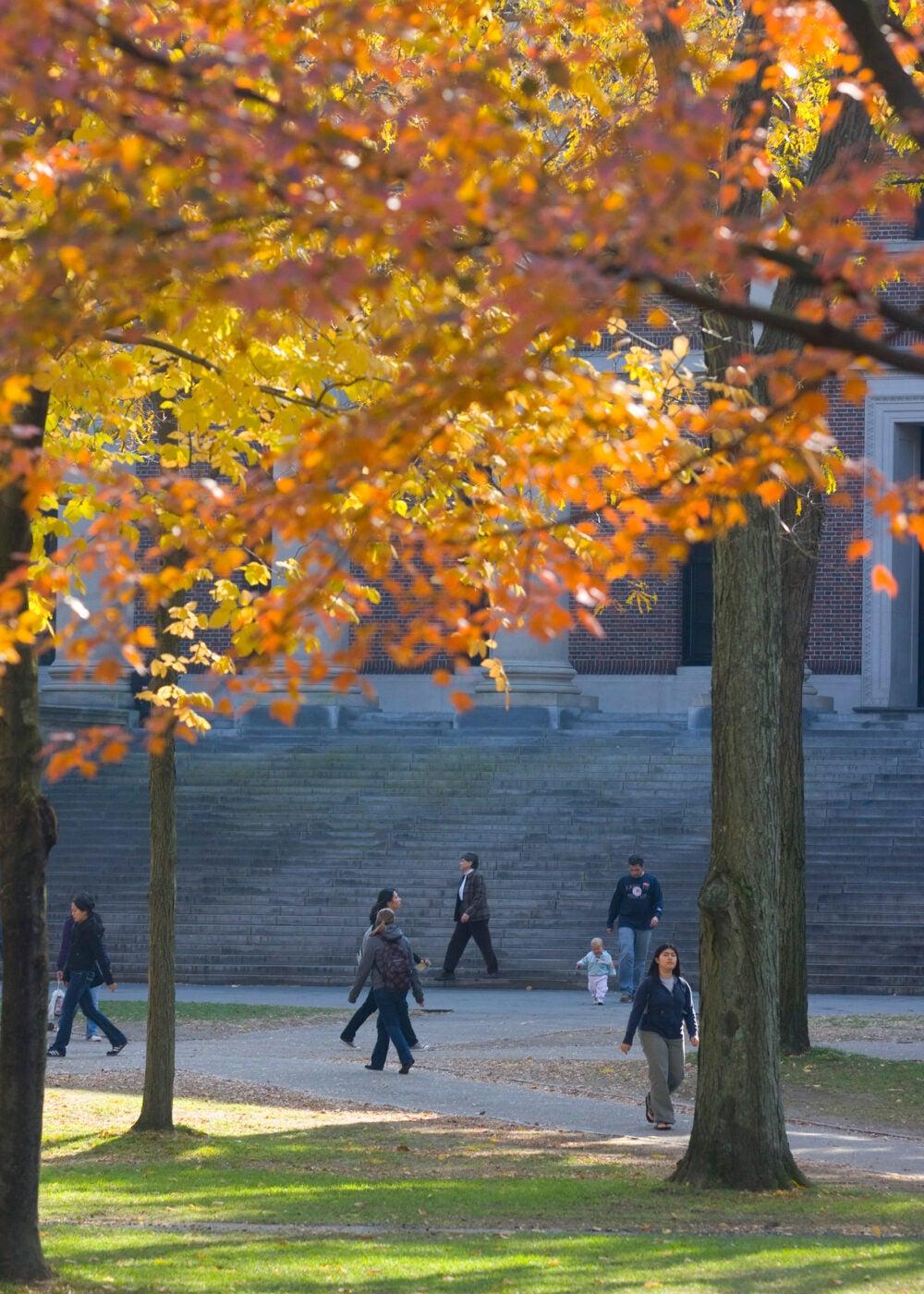Fall views of Widener Library at Harvard University. S