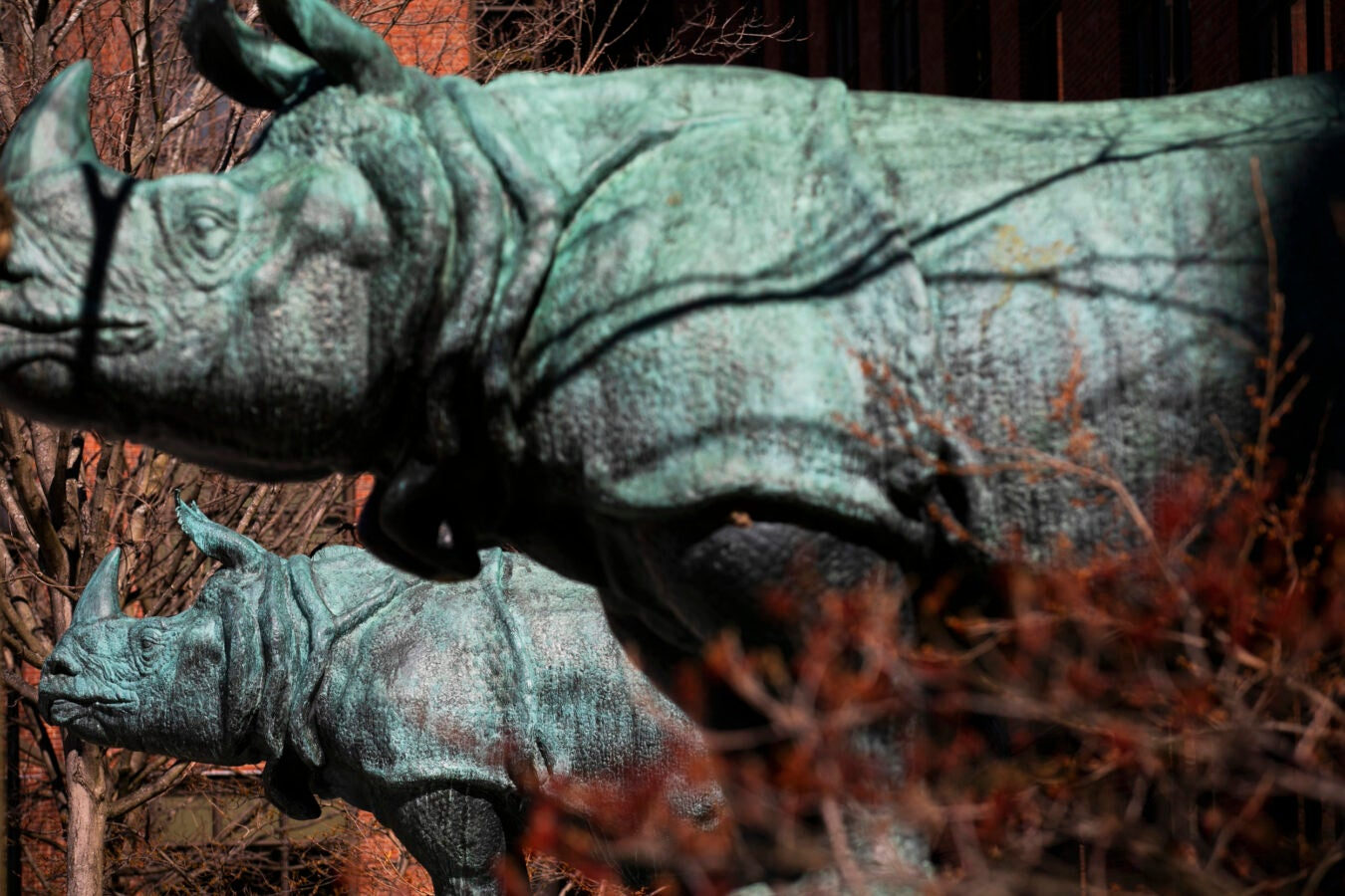 Two rhinos flank the main doors of the Biological Laboratory Building.