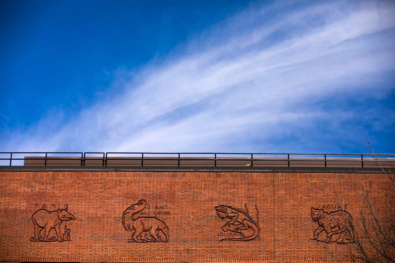 An animalia of tapir, giant anteater, iguana, and jaguar decorate the hand-carved frieze atop the five-story Biological Laboratory Building.