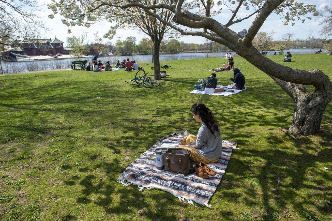 Cambridge residents relax on the grass between Memorial Drive and the Charles River.