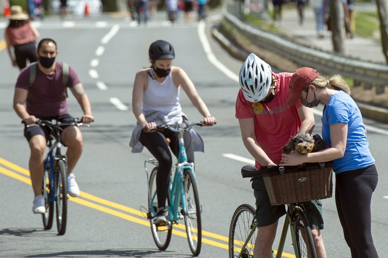 Sam Lazarus, a 2016 graduate of Harvard Business School, right, and Molly Levitt, 2010 from the Harvard Graduate School of Education, try to get their cockapoo comfortable in its new bicycle basket.