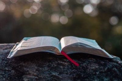 Bible sitting open on log.