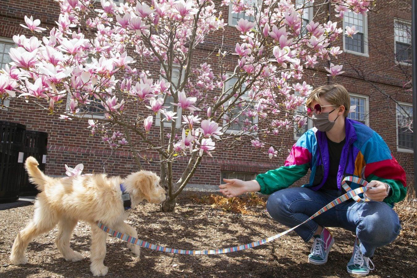 Cassidy Tanner, HBS '21 trains her dog Ellie.