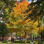 Harvard Yard with chairs.