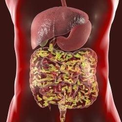 Intestinal microbiome.
