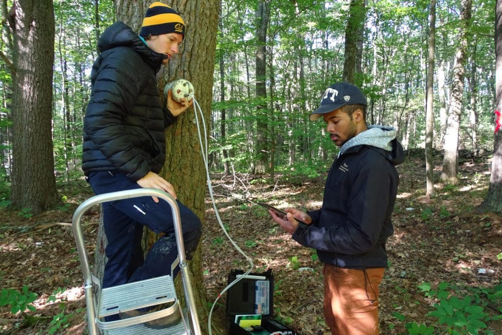 two students study a tree with special equipment.