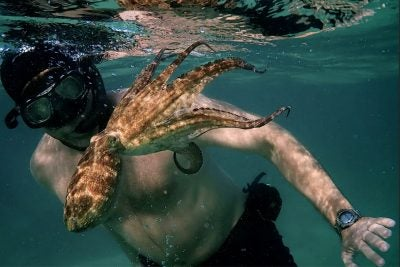 """Diver Craig Foster with octopus from """"My Octopus Teacher."""""""