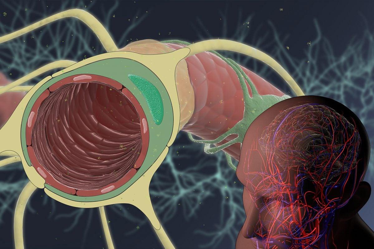 Illustration of brain.