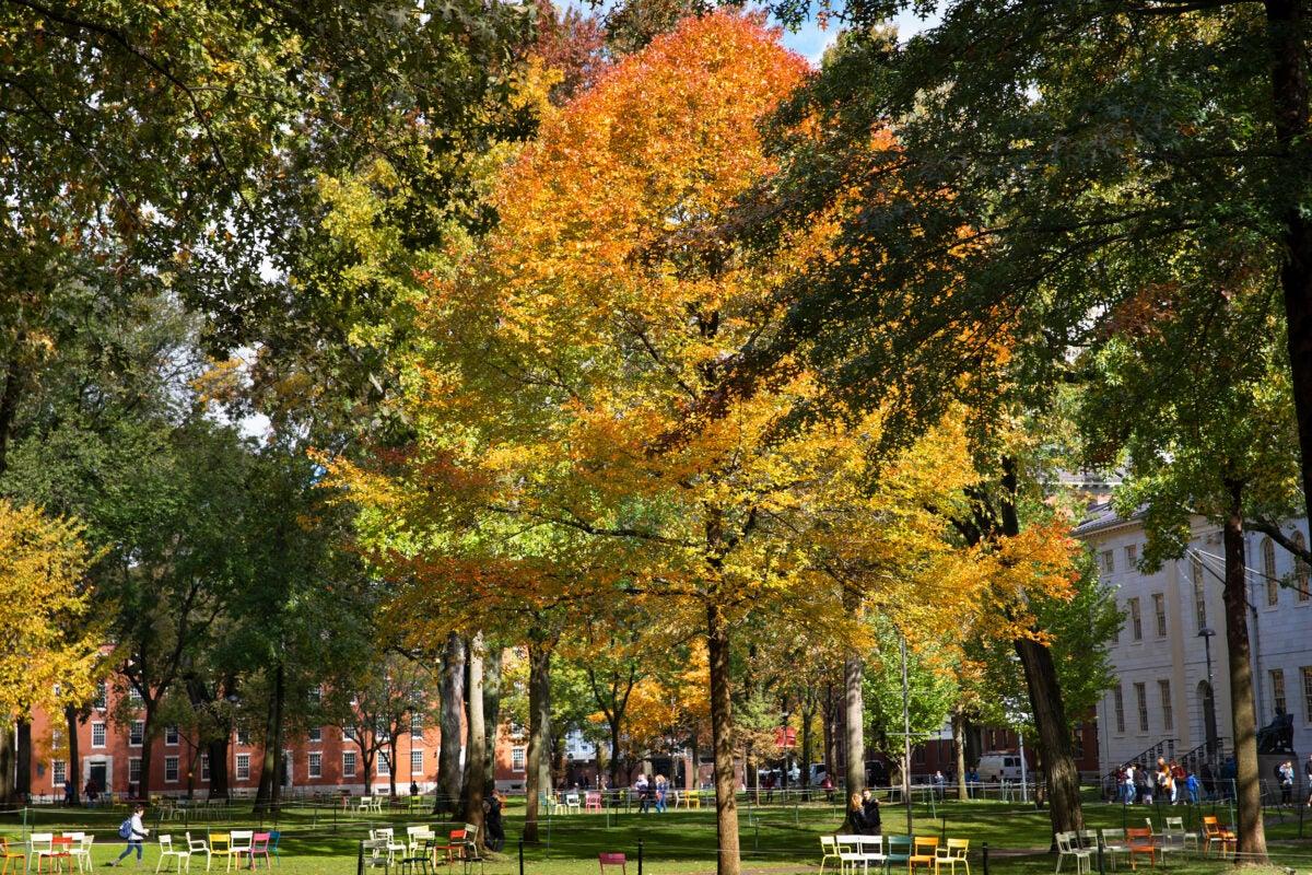 Harvard Yard in fall.