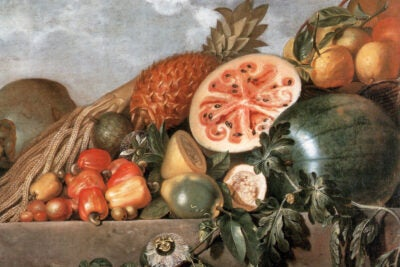 Detail of a painting by Albert Eckhout.