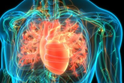 A 3D illustration concept of the human heart