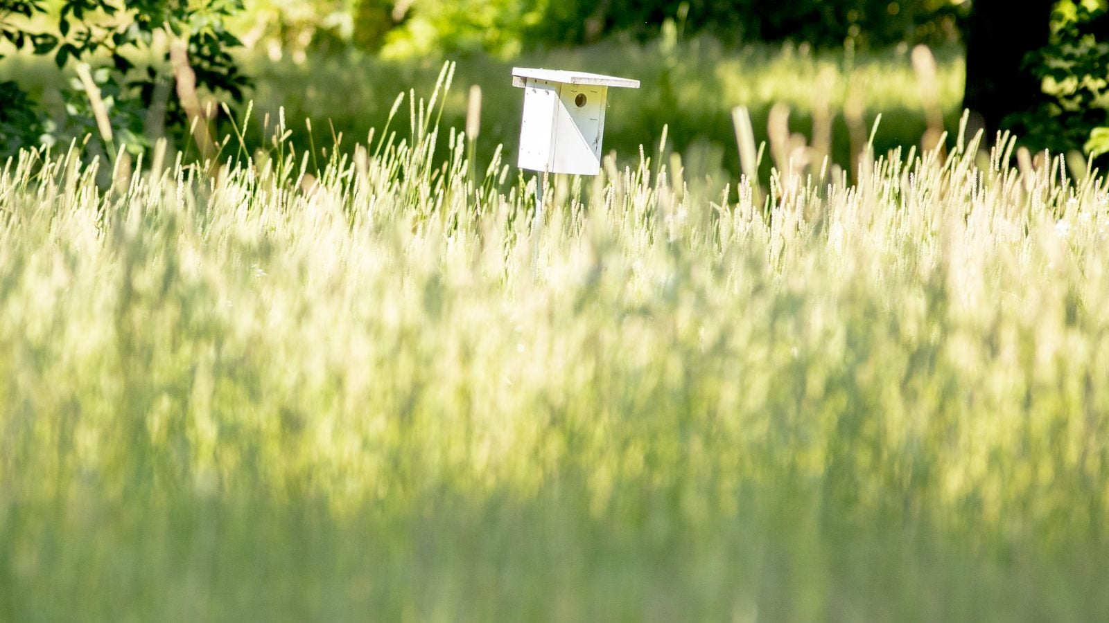 A bird house in the meadow at Arnold Arboretum.