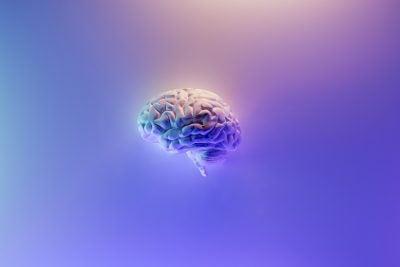 3D model of the human brain.