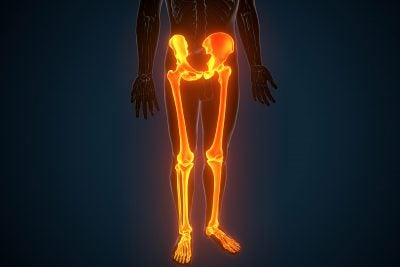 Hip and leg illustration.