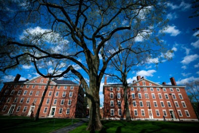 Hollis Hall and Stoughton Hall are pictured in Harvard Yard.